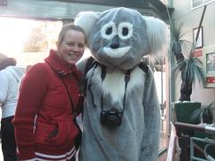 Koala und ich