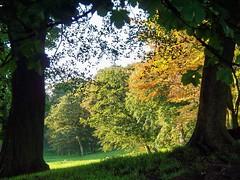 Sunny Outlook (Silver*Rose) Tags: uk trees summer england sun field northwest cumbria bowbridge barrowinfurness christinarosehowker nightshadeartimagesstream