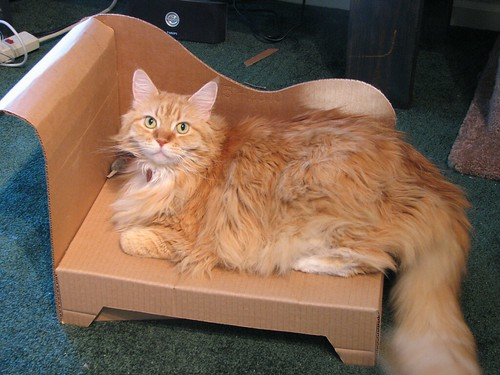 cat lounge cardboard jellybean chaise cattoy