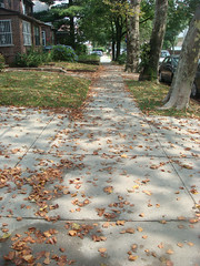 Schadenfreude (OhChiik) Tags: nyc deadleaves sidewalk queens foresthills lookslikeautumniscomingearly