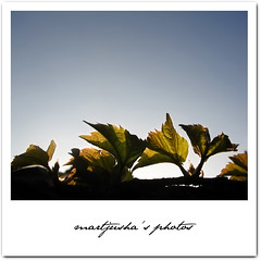 (Martjusha) Tags: light sunset sky nature leaves foglie evening leaf cielo luce sera naturesfinest abigfave platinumphoto favemegroup3