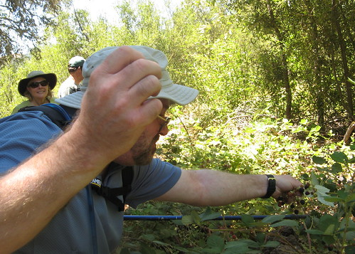 Mike grabs wild blackberries