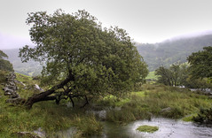 Wales, Snowdonia: Rainy Day Tree (Tim Blessed) Tags: trees sky mountains wales clouds landscapes countryside scenery rivers streams snowdonia northwales anawesomeshot singlerawtonemapped
