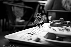 Donde comen 2 comen 3 (fertraban) Tags: portugal lisboa comida restaurante belem ave comer pájaro gorrión bandeja ltytr2 ltytr1 ltytr3 ltytr4 ltytr5 ilustrarportugal goldstaraward