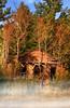 Mississippi Sharecropper Shanty (Uncle Phooey) Tags: abandoned fog explore oldhouse supershot ruralmississippi goldstaraward unclephooey