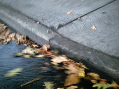.curb (skomra) Tags: usa leaves oregon america portland lomo lowresolution toycamera sidewalk pdx curb lowres vq sunplus toydigital vistaquest vq3010 lartigueeffect sunp0044