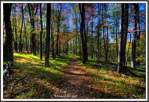 Appalachian trail- shenandoah