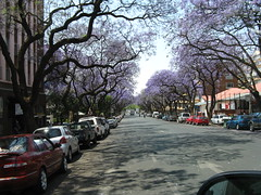 IMG_1907 (Philip & Doris Morgan) Tags: jacaranda pretoria jacarandatrees