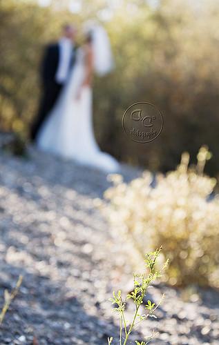 bride and groom bokeh web