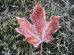 Frosty Leaf 4 (EDBW) Tags: fallleaves fall leaves leaf frost frosty w30 frostyleaves
