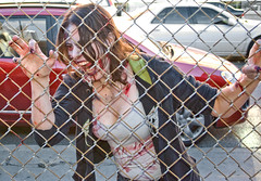 Toronto Zombie Walk 2008-6280 (sniderscion) Tags: street toronto ontario canada halloween girl festival scott dead costume scary blood nikon zombie walk makeup brains gore horror undead nightmare 1855mm nikkor cultural ghoul snider d80 sniderscion lifeimpaired