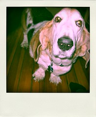 Clyde, Poladroided