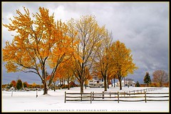 Winter or Autumn / Fall? Early Snow 2008 (:: Igor Borisenko Photography ::) Tags: autumn trees winter red sky orange white snow storm yellow clouds rural october colorful suburban pennsylvania unique gray foliage pa after moment 2008 rare allrightsreserved orton highquality lakeeffectsnow niksoftware colorphotoaward igorb81 infinestyle colorefexpro30 igorborisenkophotography sharpenerpro30