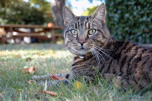 Simon in the Grass