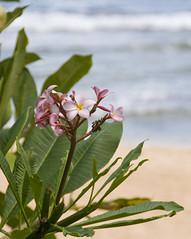 Hawaii-October-2008177