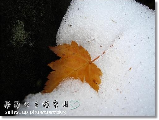 077 雪裡楓