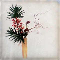 Ikebana y haiku (by Madame Fastras)