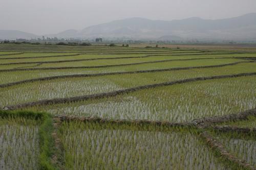 Rice terrasses in Peru...