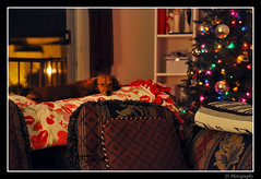Xmas Doggie (Josh Segal) Tags: christmas xmas sleeping tree photoshop hotdog nikon mini dachshund dreaming peanut 18200 cs3 d90
