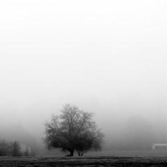 arbre dans la brume, flickrcc http://www.flickr.com/photos/41864721@N00/3092327234
