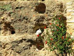 Sevilla (Graa Vargas) Tags: espaa canon sevilla spain dove ph227 2008graavargasallrightsreserved 2202090109 realesalczaresgraavargas