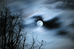 Wolf Moon - full moon (Sky Noir) Tags: blue sky moon cold tree silhouette werewolf night clouds lune dark mond wolf cloudy vampire stormy luna full fullmoon moonrise lua lunar partlycloudy wx maan    wolfmoon   billdickinson skynoir  projectweather bybilldickinsonskynoircom