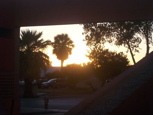 sun on palms