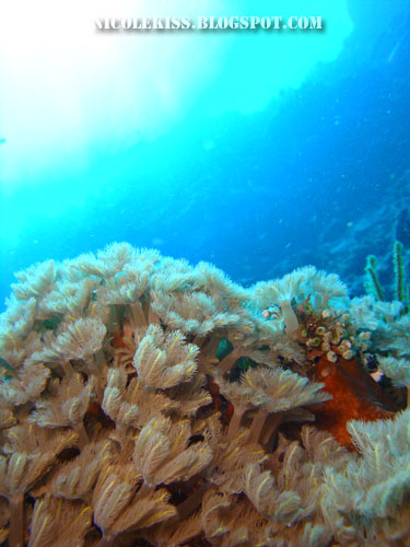 underwater world in bunaken