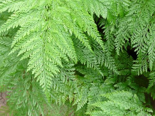 in the garden in june2009