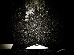 Snow frozen in the woods, Washington State (Michael Joseph Goldst... etc) Tags: winter snow silhouette frozen washington snowy freezing floating falling evergreen redmond washingtonstate vignette douglasfir earthnight lpfloating winterinwashingtonstate