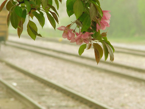 tracks and blossoms {3}