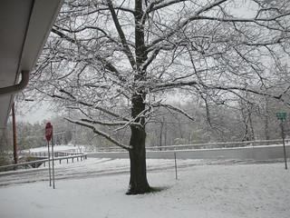 Corner of Miller Road on April 28th snow storm