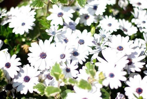 Kwiecie / Blossom by Rrrodrigo