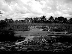 sawmill (ma vie en rouge) Tags: bw southamerica guyana caribbean myfavorites sawmill deforestation amricadosul sudamrica