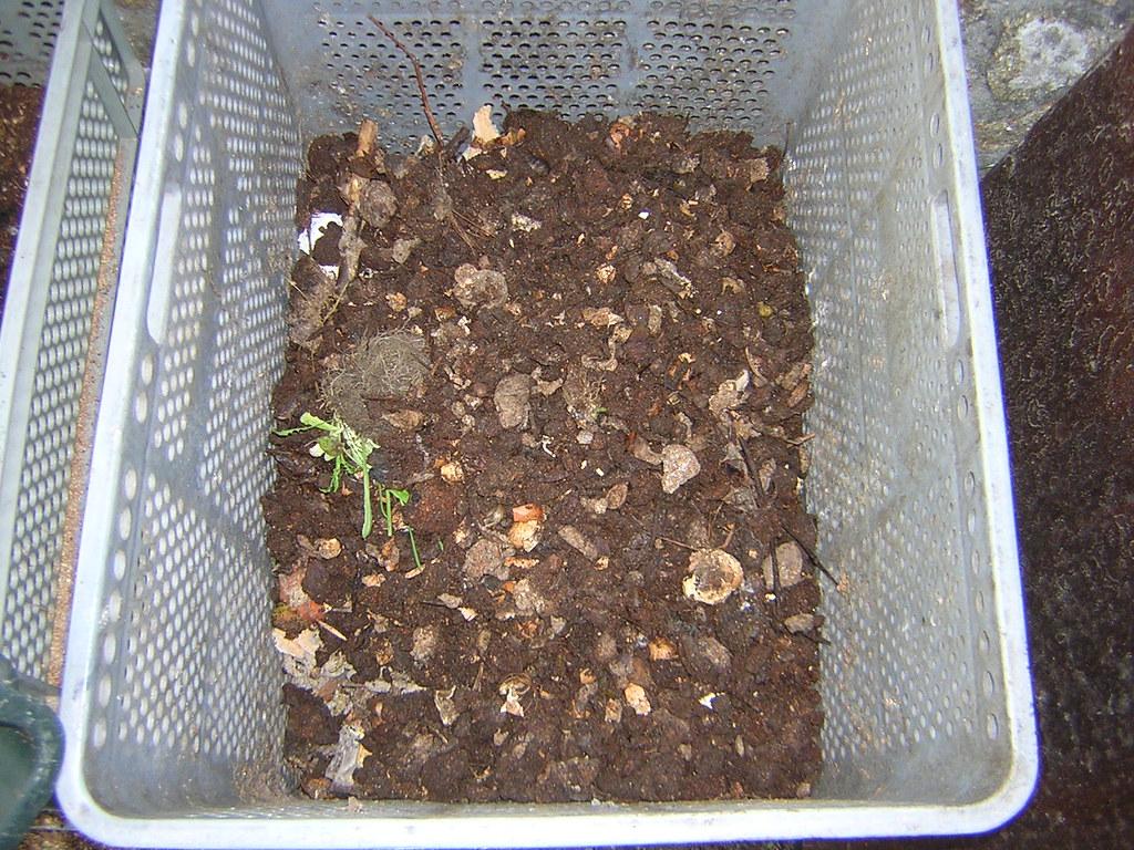 Mi compostador!! 2317581403_4880dfd6aa_b