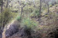 Yacka's (Zonifer Lloyd) Tags: flowers landscape australia hdr yacka soutaustralia appenninosettentrionalealpinatura ptgermeingorge