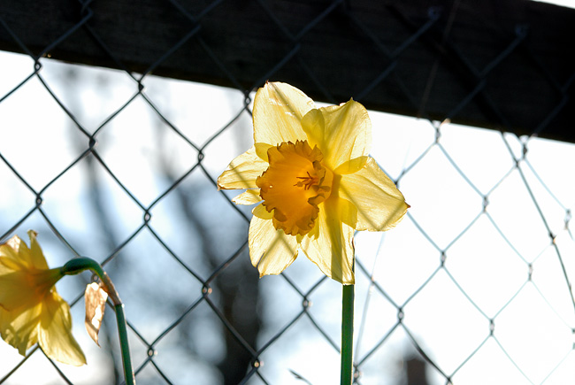 DSC_9251-Large-flower