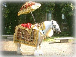 White Indian Wedding Horses hire Birmingham