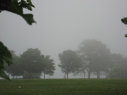 Foggy View