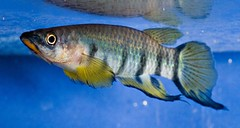 The World's newest photos of convention and killifish