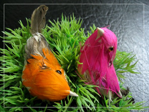 Ideal birds 01