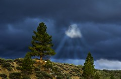 Pine Tree and Sun Rays (Bill Wight CA) Tags: storm tree nature clouds landscape sunrays highsierras iloveit naturesfinest creativephotography golddragon anawesomeshot ourplanet top20travel diamondclassphotographer flickrdiamond inspirationalphotosgroup betterthangood theperfectphotographer simplysuperb damniwishidtakenthat photographersgonewild natureandnothingelse jediphotographer billwight