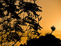Good Morning Sunshine (Federico Alberto) Tags: sunrise contraluz dominicanrepublic olympus amanecer e3 nophotoshop crpuscule 50200mm republicadominicana santodomingo aurore crepsculo dn frontlight repblicadominicana rpubliquedominicaine supershot nohdr mywinners abigfave platinumphoto anawesomeshot colorphotoaward goldstaraward olympuse3 zd50200mmswd flickrlovers lverdusoleil