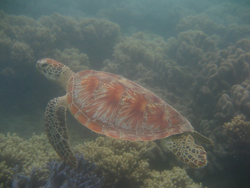 turtle Low Islet