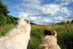 We're looking at the big sky (kerri.o) Tags: fab sky fields wolfhound lurcher tealeaf kubrin lyricsbykatebush