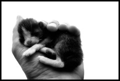 life in a hand (Ferran.) Tags: cat catalonia mp3 gato gat ripolles queralbs bwart