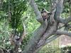 Zoo de Karlsruhe Germany (HSSand) Tags: nature animals landscape zoo monkeys moutain environnement stadtgarten bundesgartenschau recreationalarea karlsruhezoo bundeslandbadenwürttemberg nearthefrenchgermanborder federalgardenshow