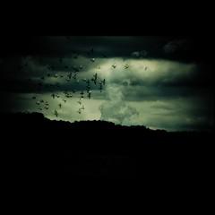 Armageddon [Landscape 42] (Christine Lebrasseur) Tags: sky blackandwhite france green art texture 6x6 birds sepia clouds canon landscape lafotodelasemana smoke firstplace onblack 500x500 coolshot flickrchallengewinner bestofr goldenvisions allrightsreservedchristinelebrasseur magicunicornverybest selectbestexcellence magicunicornmasterpiece sbfmasterpiece landscapeseascapeskyscapeorcityscape