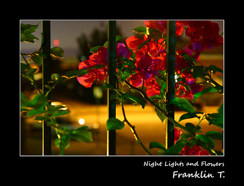 Night Lights and Flowers