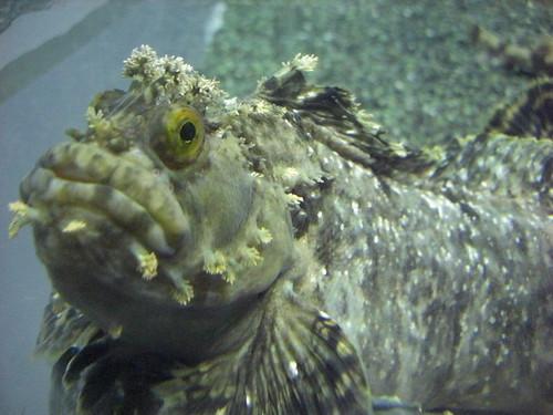 魚@エプソン品川アクアスタジアム
